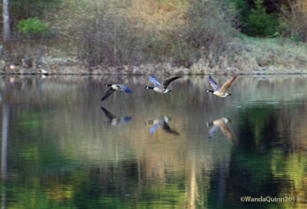 image of geese flying over water and their reflection on the water