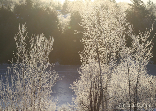 image of frosty looking trees