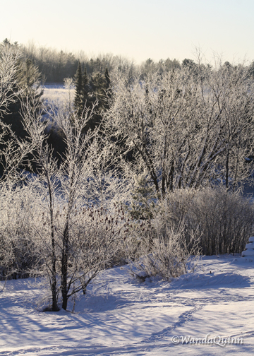 image of frosty looking trees in morning