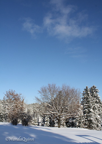image of clear blue sky, small cloud and snowy trees