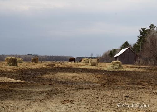 img9326_farm