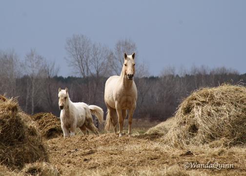 img9332_whitehorses