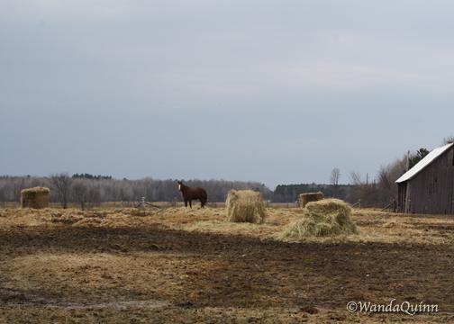 img9338_horsebarn