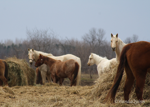 img9341_horses
