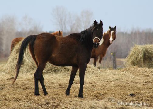 img9344_horses