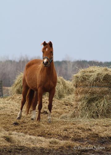 img9352_horse