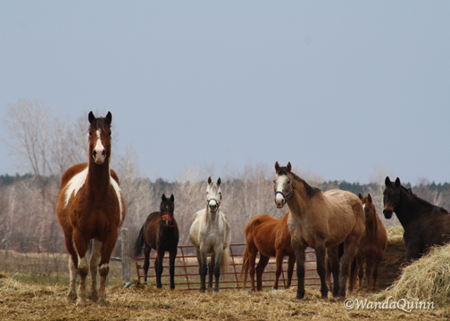 img9377_horses
