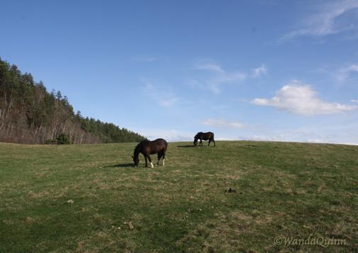 img9522_horsesgrazing