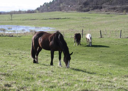img9532_horses