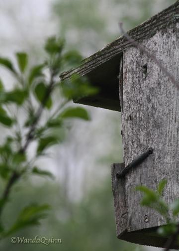 img9672_birdhouse