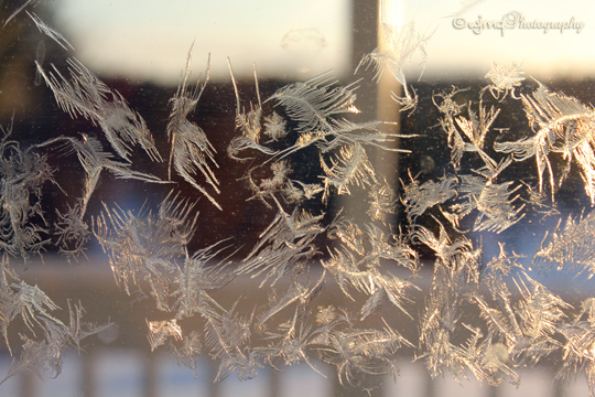 Frost_Faerie_IMG_1562