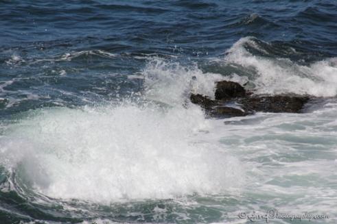oceansurf_IMG_3038