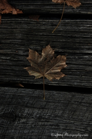 Maple leaf on the warf, Perth, ON - November 2015 ©WandaQuinn