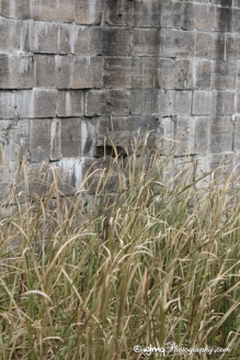photo of grass growing in lock in Smiths Falls ON