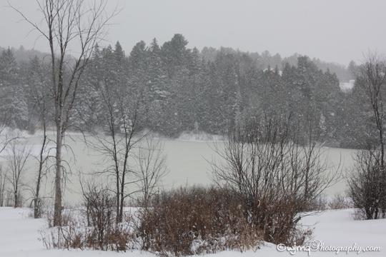 snowyday_IMG_6993