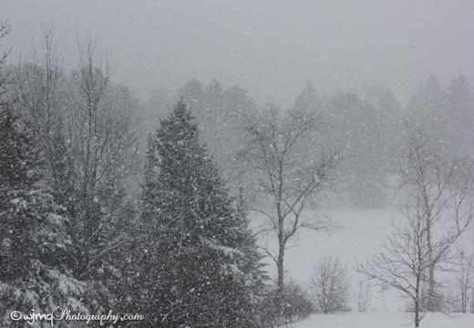 snowstorm_jan1_IMG_7036 copy