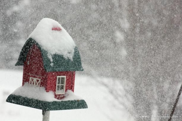 20160216_snowstorm_birdfeeder_IMG_7388