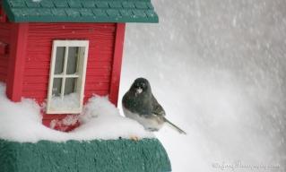 20160216_snowstorm_birdfeeder_IMG_7402