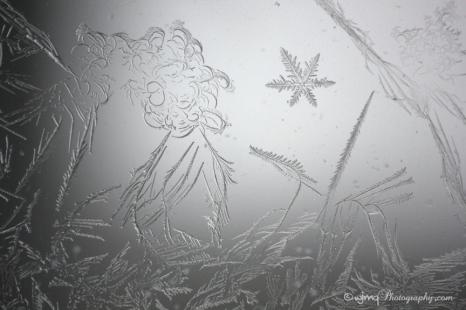 FrostFaeries_IMG_7432