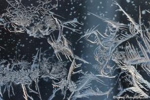 frostfaerie_7603-3