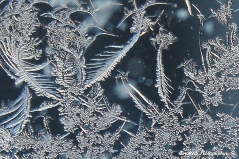 frostfaerie_7610-7