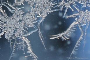 frostfaerie_7614-2