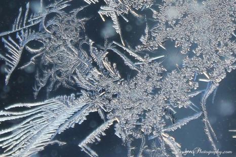 frostfaerie_7614-3