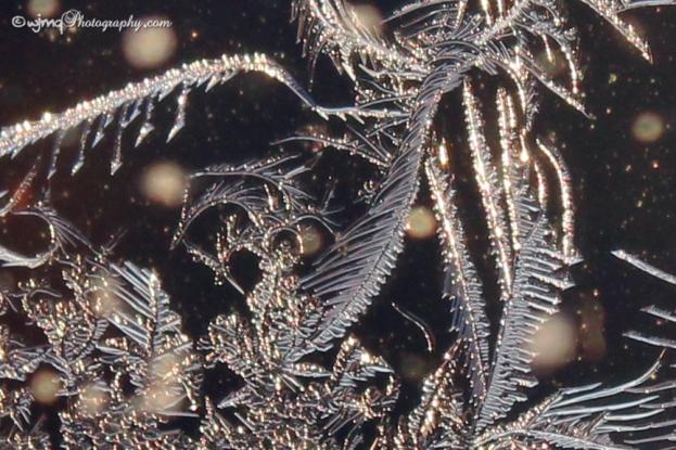 frostfaerie_7622-1
