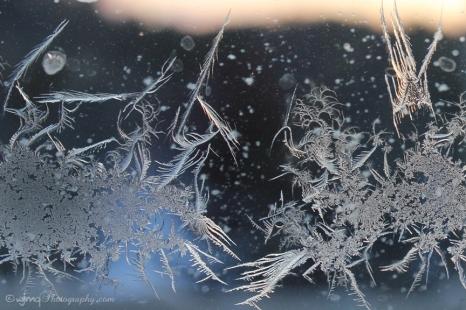 frostfaeries_7604