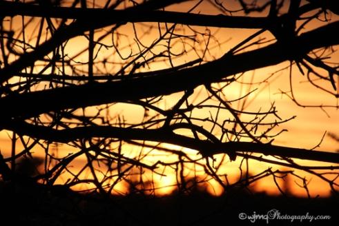 sunset_IMG_7764